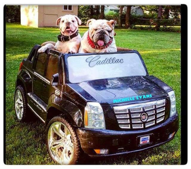 il corteggiamento nei cani