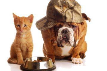 Bulldog inglese e gatto amici o nemici